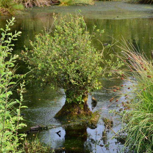 Rondje Leuker en Reindersmeer